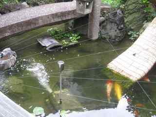 鯉(2).jpg
