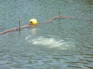 浮間公園気泡写真230813.JPG