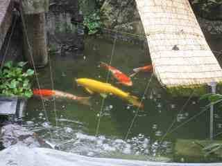 鯉(1).jpg